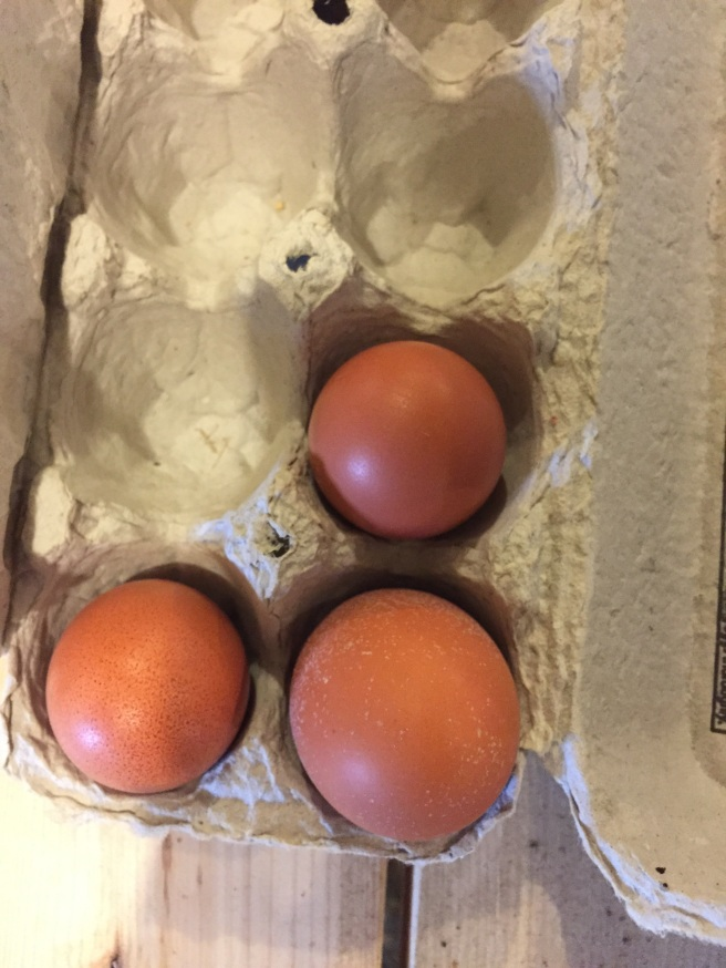 Abigail's first 3 eggs.  The first, as you can see, is bigger than the two newer ones.