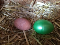And here is a comparison of the real egg with the plastic egg. The Plastic egg is the standard size, too. Abby's egg is about the same length, but not as big around. Bigger than I thought it would be, though.