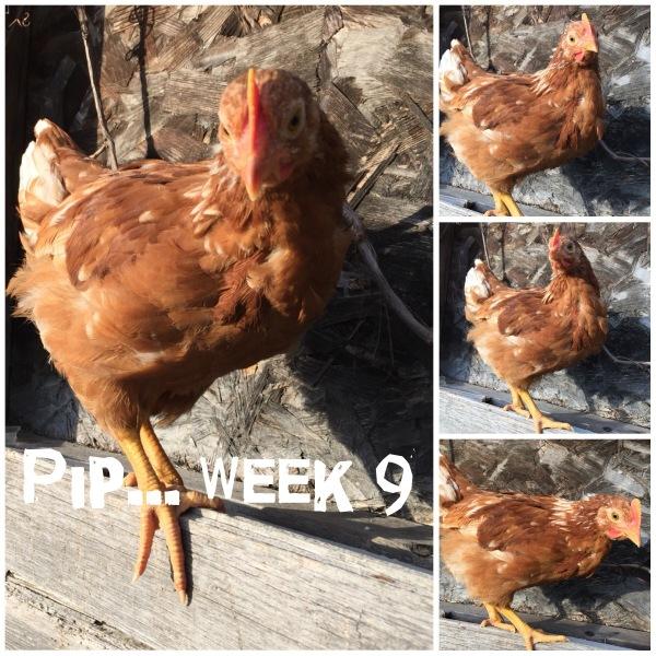 Week 9's Photoshoot