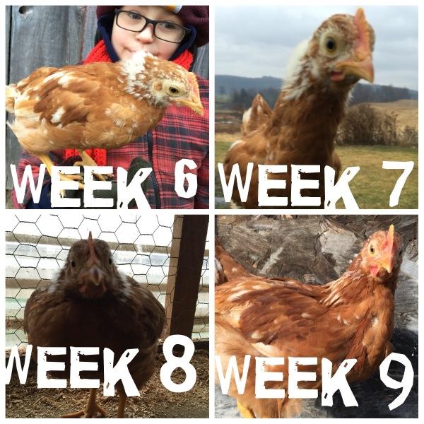 Pip, weeks 6 through 9