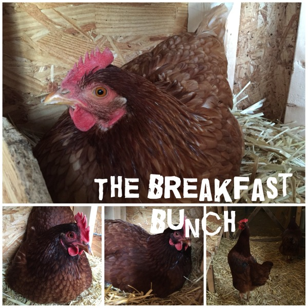 The 'Breakfast Bunch' starring Abby, Claire, Amy and Jolene