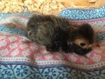 Baby Pavlovskaya